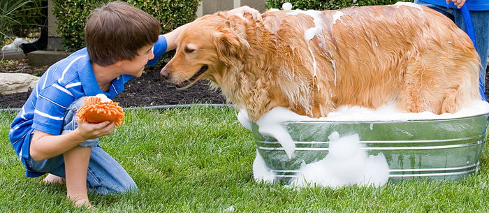 How often should you wash a dog