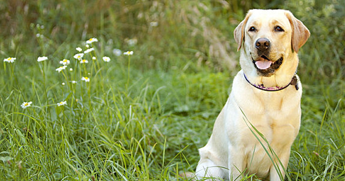 How To Tell If A Dog Is Pregnant Carecom