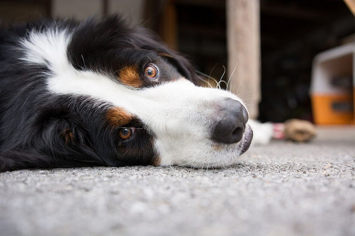Dog Stomach Gurgling: Potential Causes - Care com