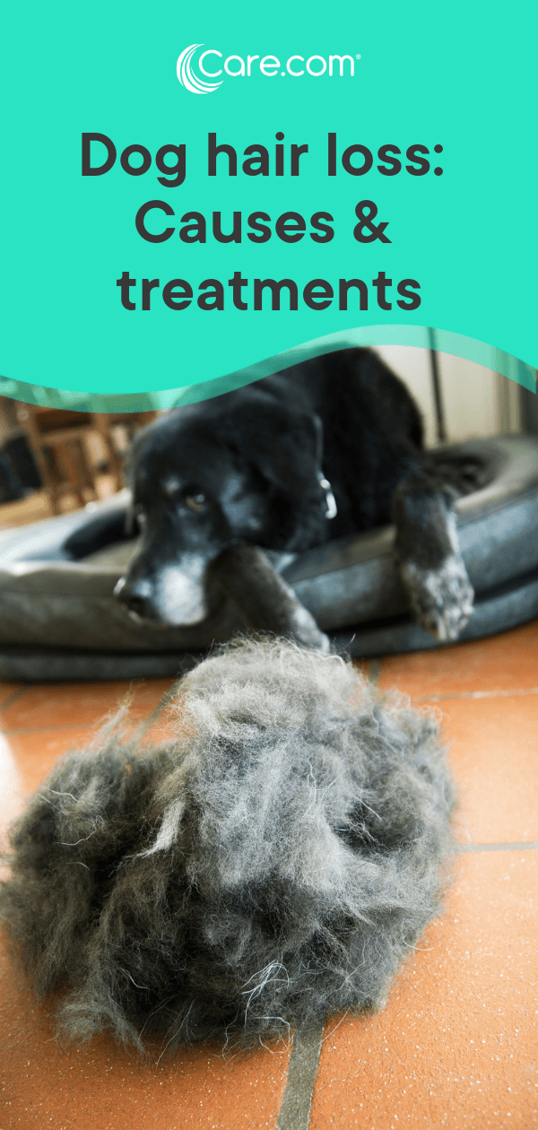 Dog Losing Hair? Here Are Potential Causes — And How To