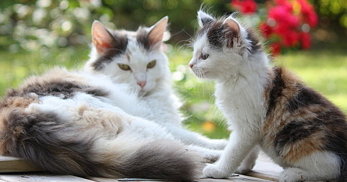 5 Signs Your Cat Might Be Pregnant Care Com