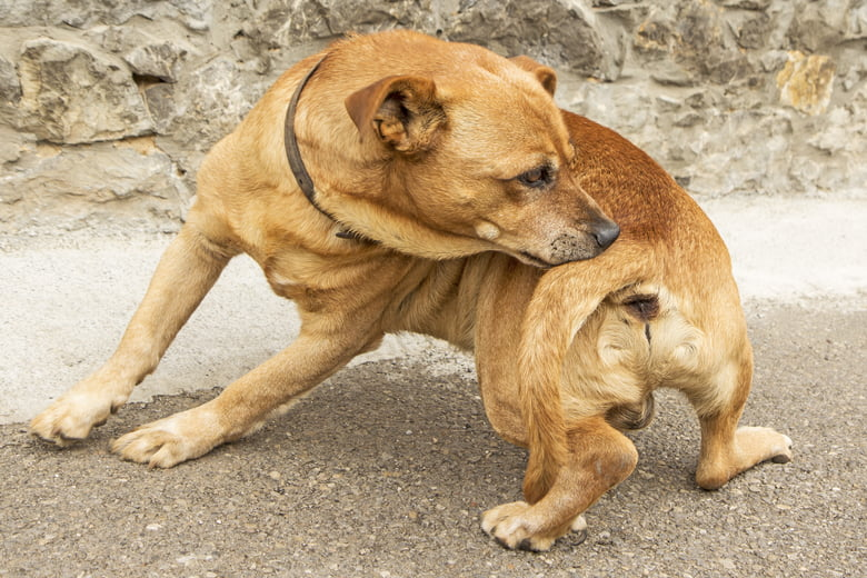 Hot Spots On Dogs: Causes, Treatments And Home Remedies