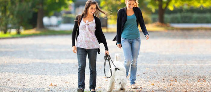 How To Interview For Pet Care Jobs - Care com
