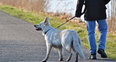 take your best friend on an adventure with these 9 great dog walking apps