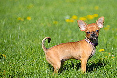 15 Types Of Short Haired Dogs Find The Perfect Breed For