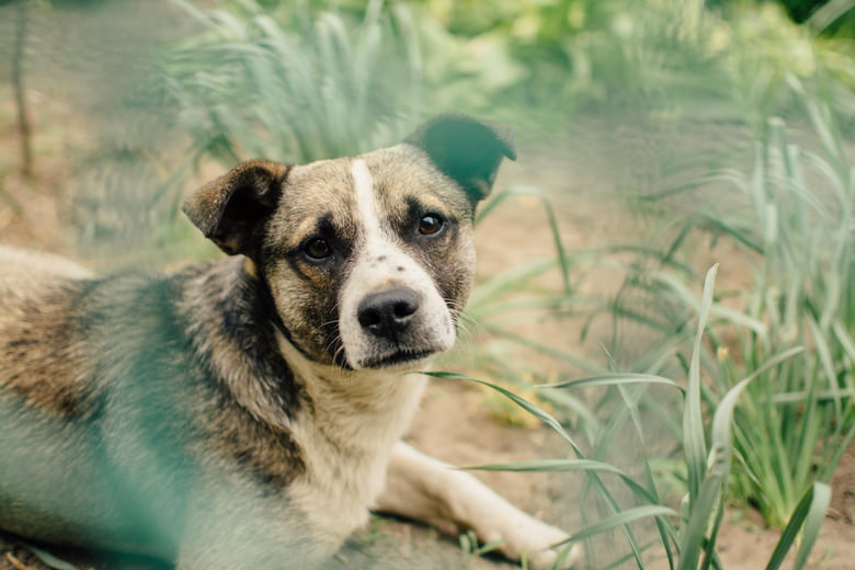 Microchipping Your Dog: What You Need To Know - Care com