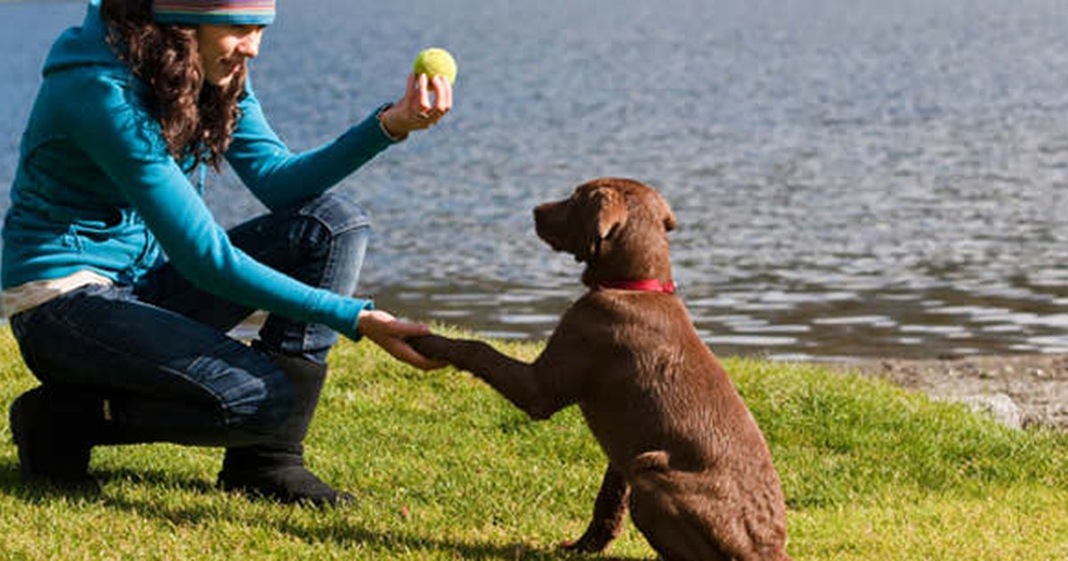 Howto Develop Into A Skilled Dog Walker