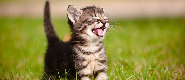 101 amusing cat facts fun trivia about your feline friend care