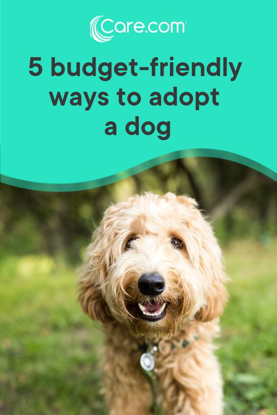 5 Ways To Adopt A Dog On The Cheap - Care com