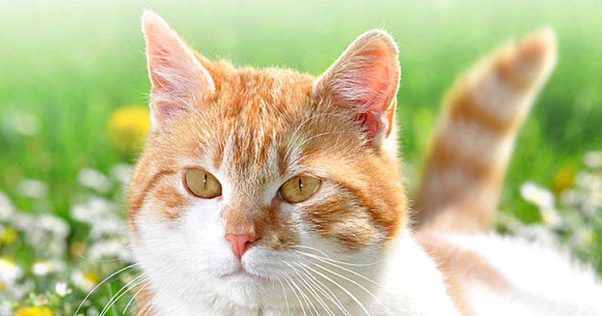 Neutering A Cat: The Benefits And Costs - Care.com