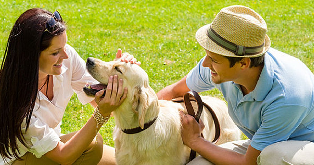 11 Tips On How To Introduce Dogs To New People And Other Dogs ...