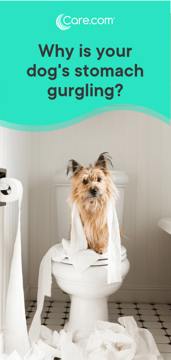 My Dog's Stomach Is Gurgling! Causes, Concerns And When To