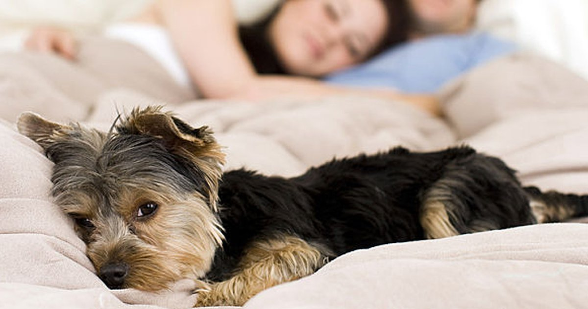 Liver Disease In Dogs: The Signs, Symptoms And Solutions