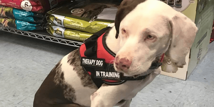 Blind Deaf Dog Training To Become Therapy Animal Care Com