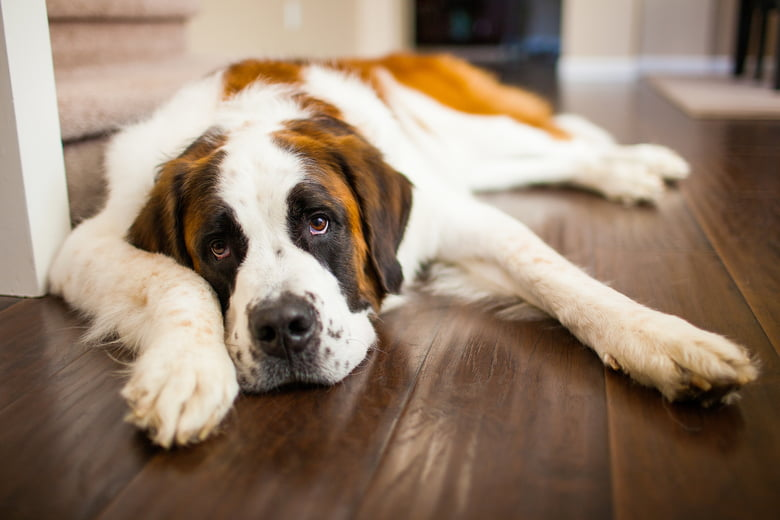 10 Of The Strongest Dog Breeds In The World - Care com