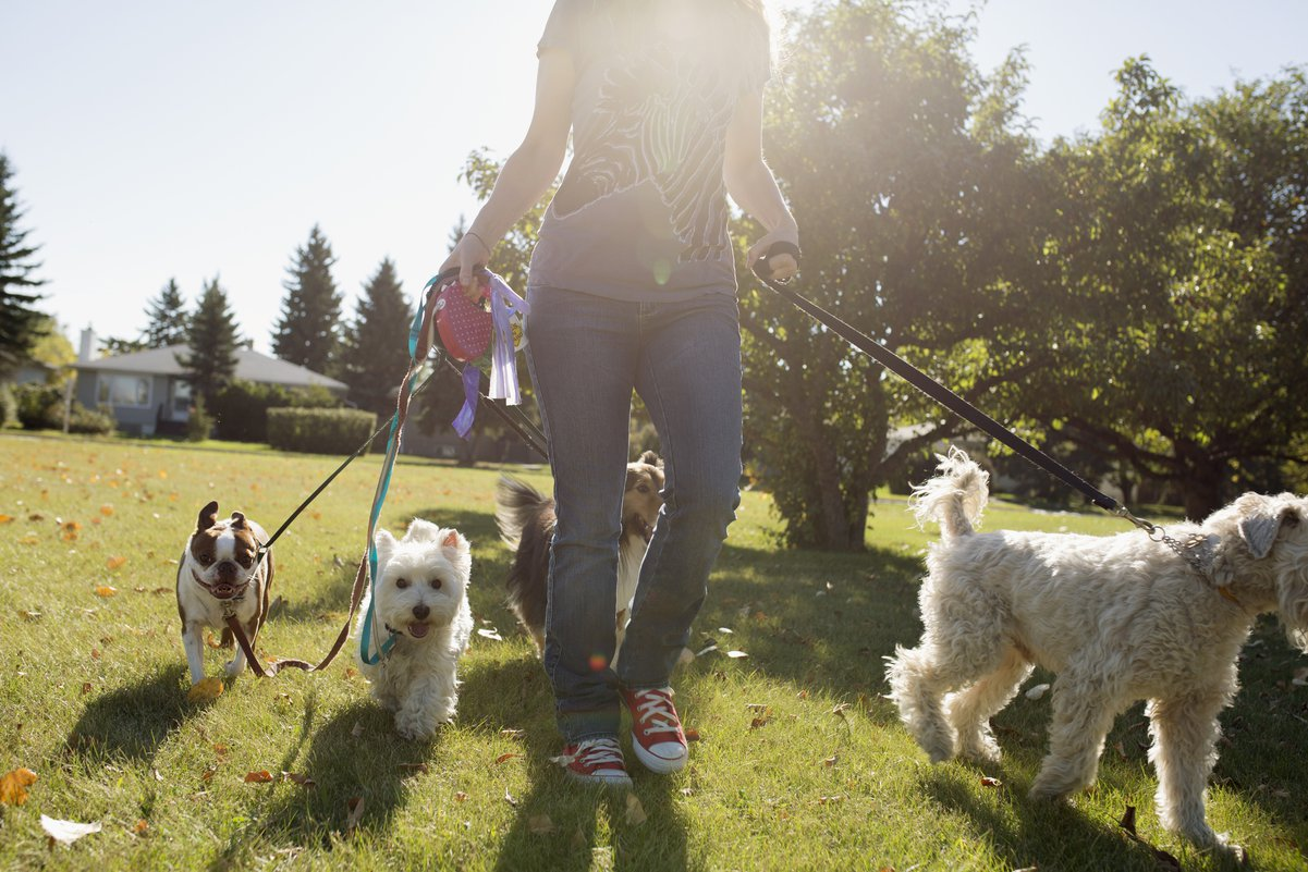 the dog walkers startup guide create your own lucrative dog walking business in 12 easy steps