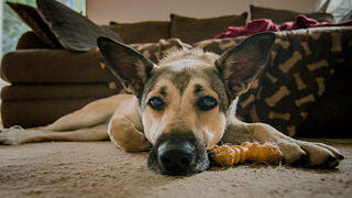 Do I Have A Sick Dog? 11 Signs It's Time For A Trip To The