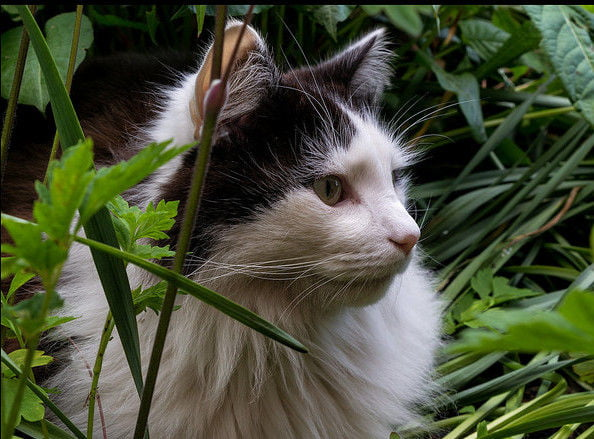 With Some Basic Knowledge Of Which Substances Safely Repel Cats, You Can  Keep The Kitties At Bay And Your Garden Looking Great.