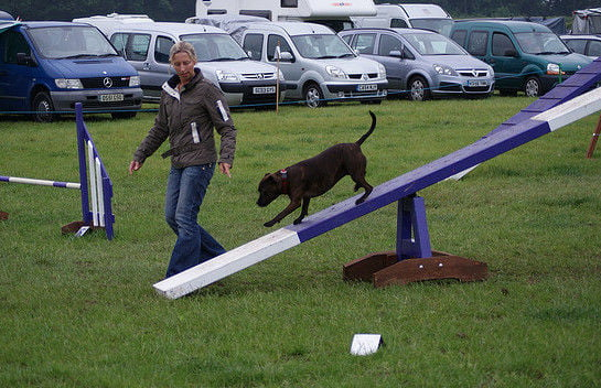 Try The Tips From Agility Bits. Once Your Pup Masters The Dog Walk, Enlist  A Friend To Help Guide Your Dog On One Side Of The ...