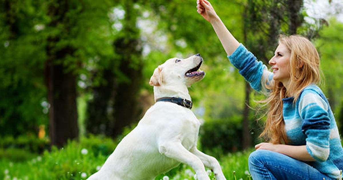 10 Things To Look For In A Pet Sitter - Care com