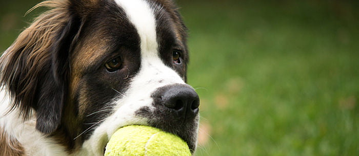 17 diy dog toys how to make fun safe toys from things in your does it seem like dog toys come into your house for the sole purpose of being destroyed can your pup rip the squeaker out of a stuffed duck in 30 seconds solutioingenieria Gallery