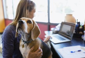 What to look for in your next dog sitter