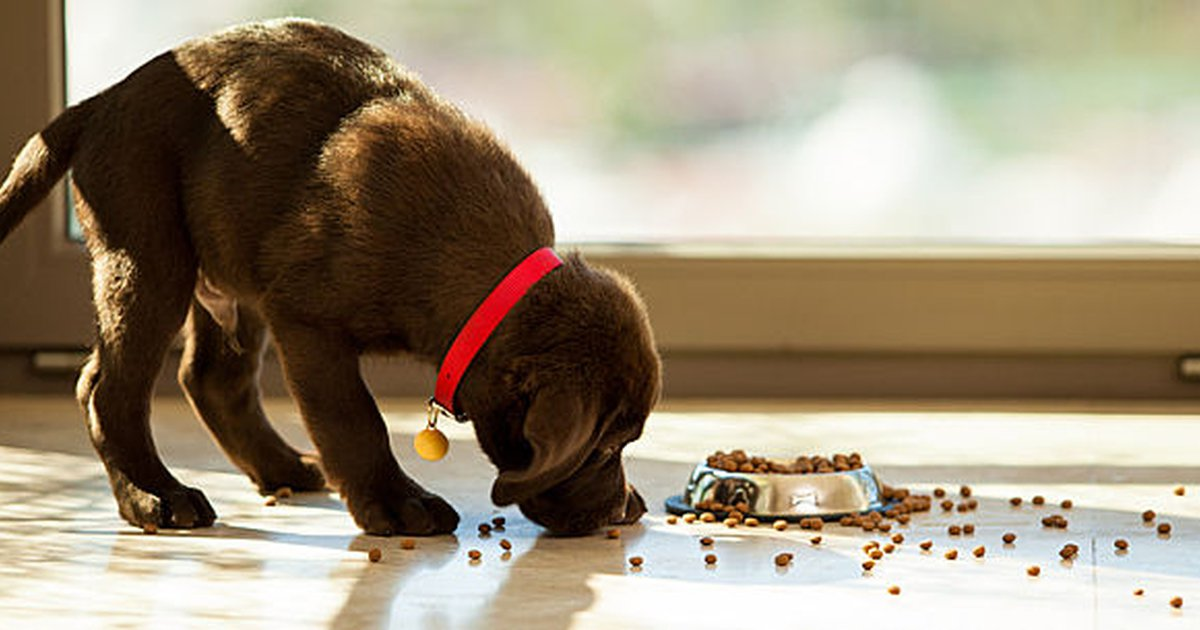 10 Must Dos When You Have A Diabetic Dog Care Com