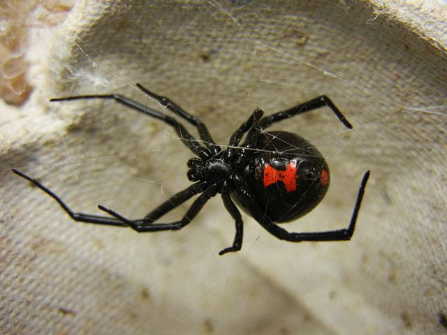 Spider Bites On Dogs What Owners Need To Know , Care.com