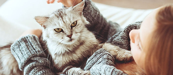 Although Cats Are Often Thought Of As Low Maintenance Pets They Can Become Irritable If Not Given Enough Stimulation For The Sake Your Kittys Health