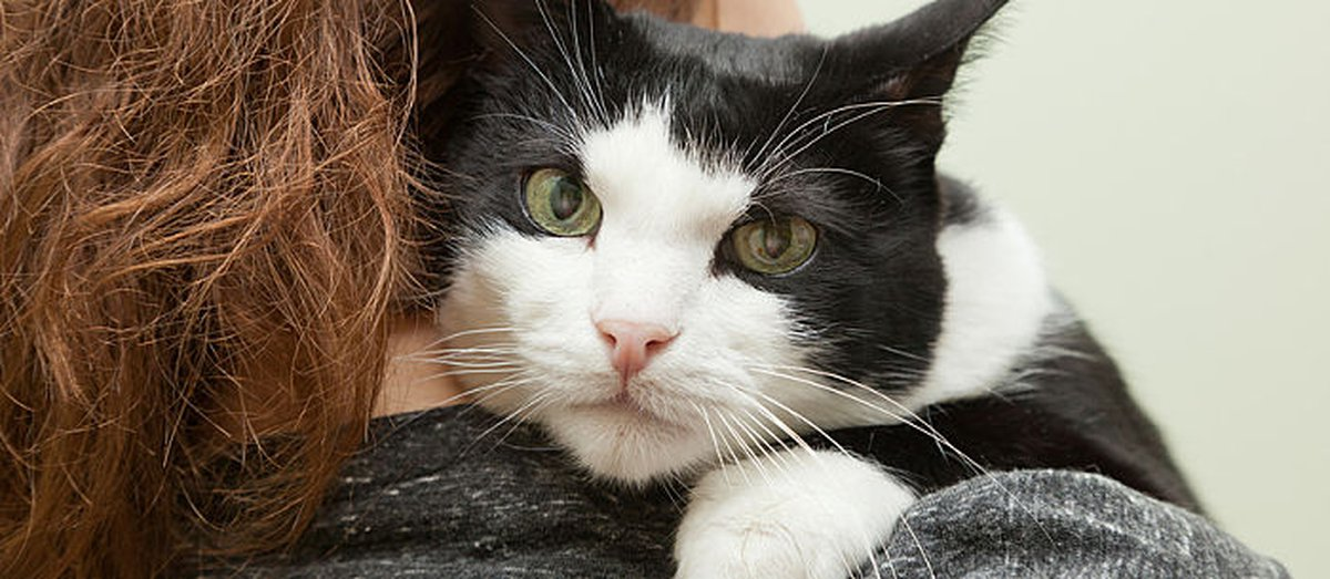 Spaying A Cat: The Benefits And Cost - Care.com