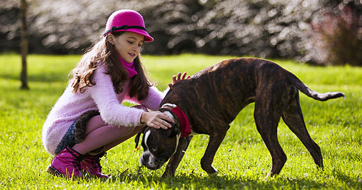 7 Of The Best Guard Dogs For Families Care Com