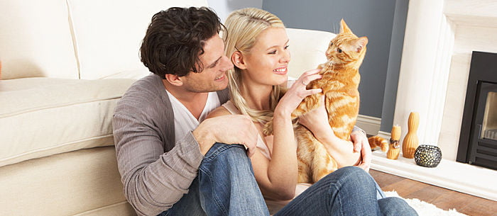 cats urinary tract infection