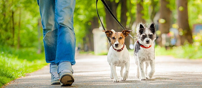 Dog Walker Tales: Stories Of The Unexpected! - Care com
