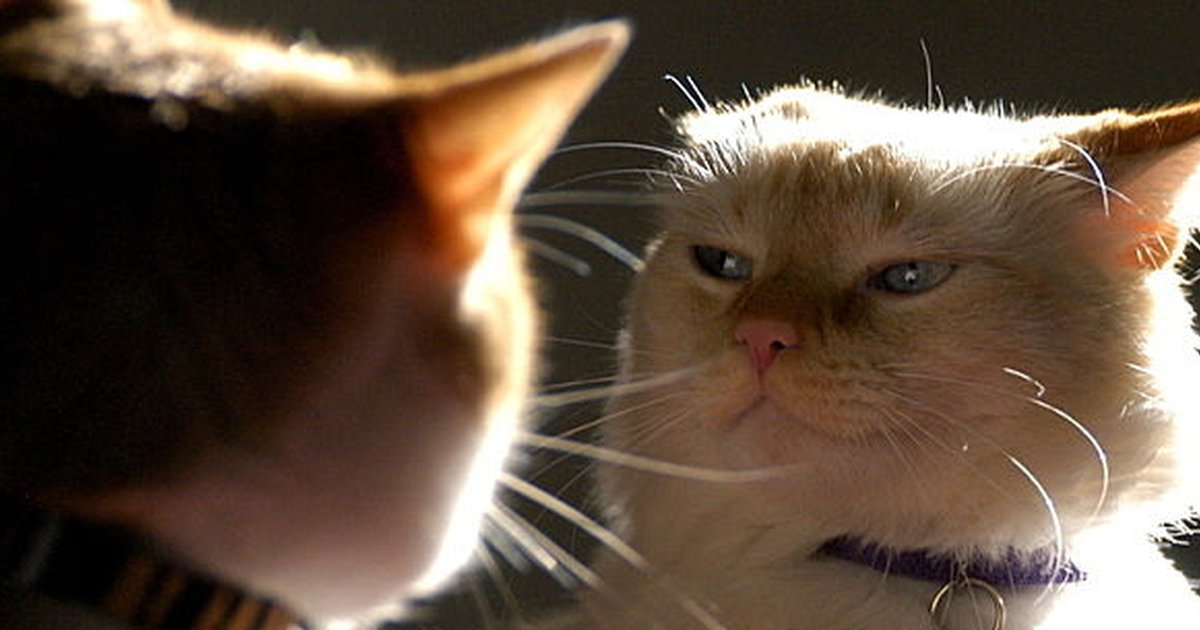 Cat Fight Causes And Prevention Tips Care Com