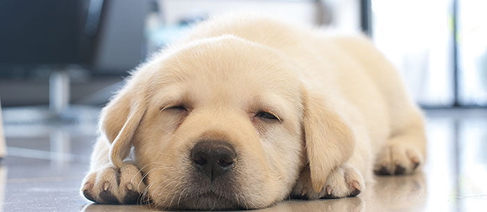 Puppy Love: 9 Of The Most Adorable Puppies On The Instagram - Care com