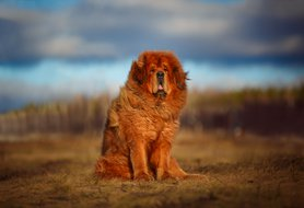 Expensive dog breeds: What to know about them and their price tags