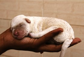 Puppy stages: A week-by-week guide to caring for a newborn puppy