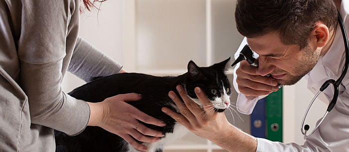 Do You Have A Sick Cat 11 Signs It S Time For A Trip To The Vet Care Com