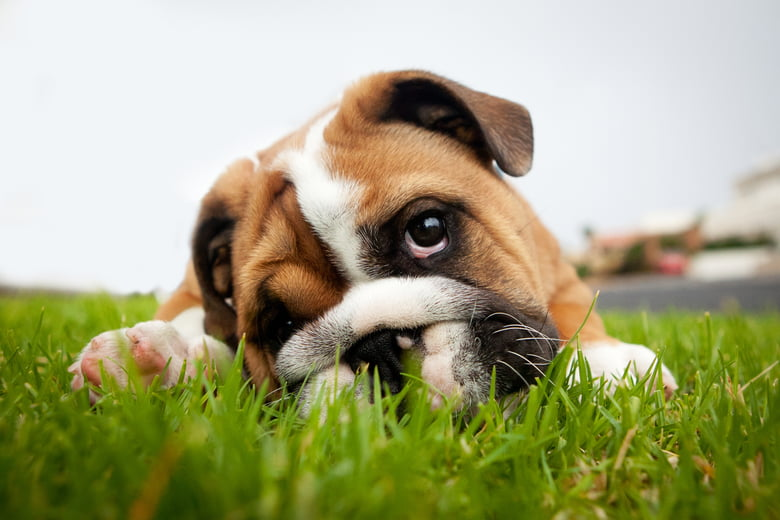 Worms In Dogs: What Are The Types, Symptoms And Treatments