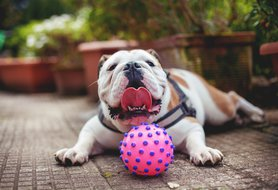10 medium-sized dog breeds that are great for families