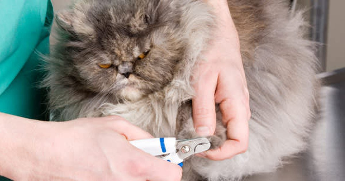 Cat Care To Declaw Or Not To Declaw Care Com