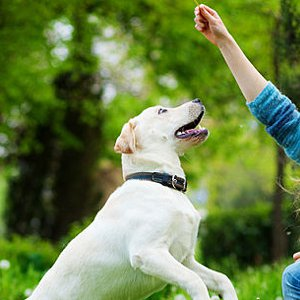 How To Make Your Dog Feel Loved: 8 Ways To Spoil Your Best Friend - Care.com Community