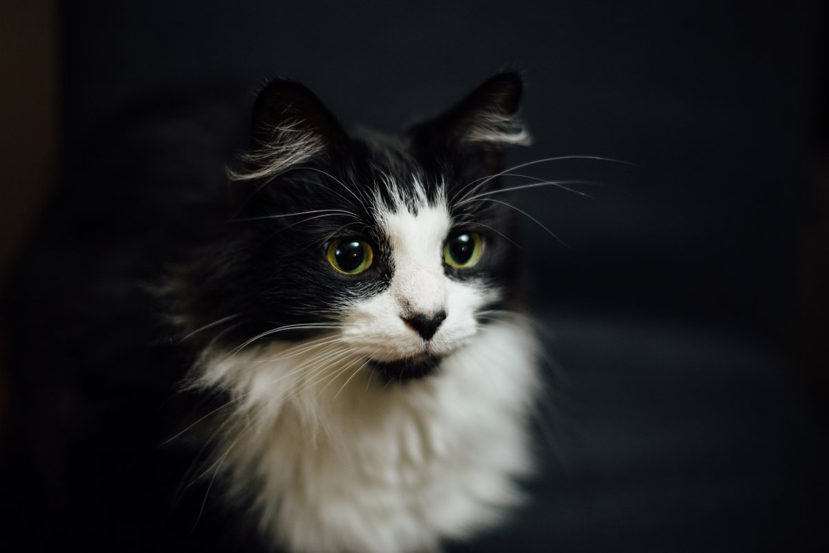 101 Amazing Cat Facts Fun Trivia About Your Feline Friend Care
