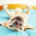 101 dog facts to delight and fascinate animal lovers