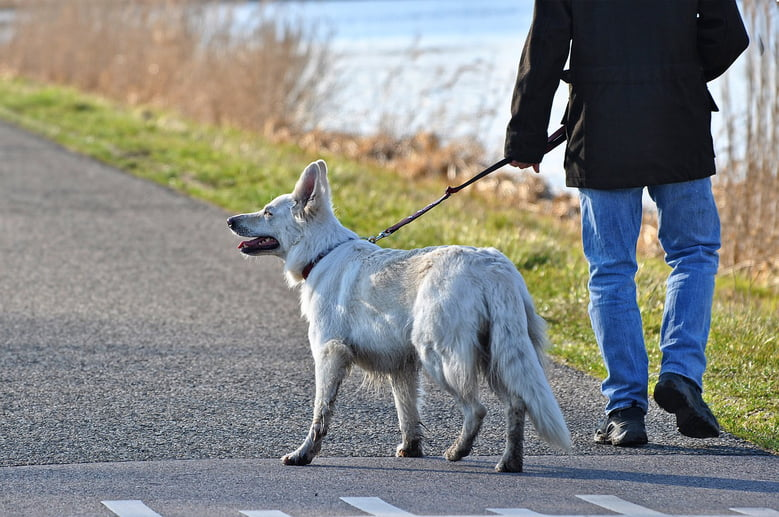 Take Your Best Friend On An Adventure With These 9 Great Dog Walking