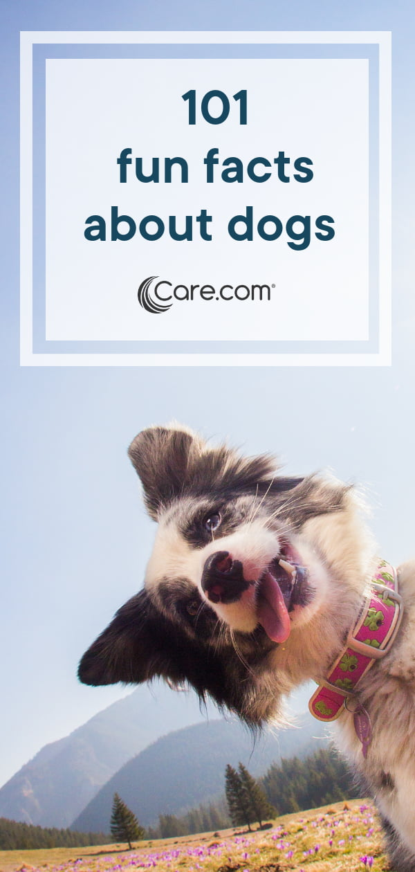 All About Dogs: 101 Fun Facts - Care com