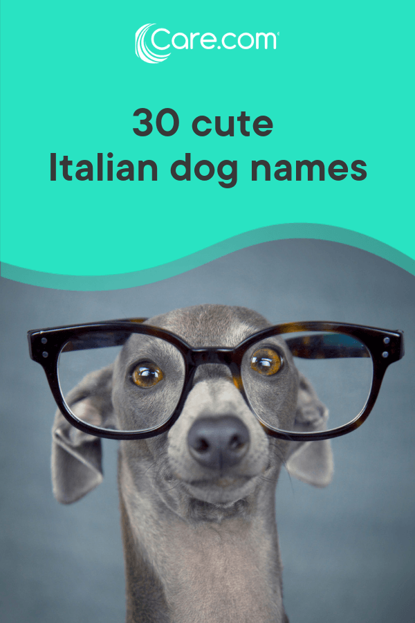 30 Cute Italian Dog Names And Their Meanings - Care com