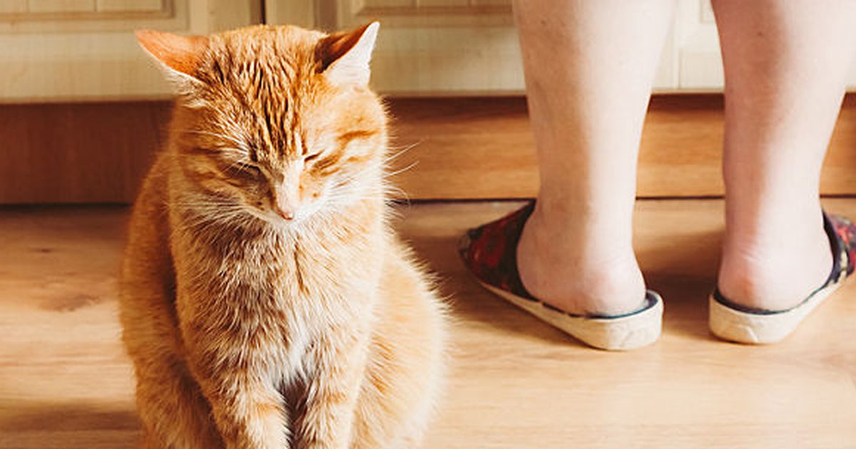 Do Cats Fart? An Answer To The Age-Old Question - Care com
