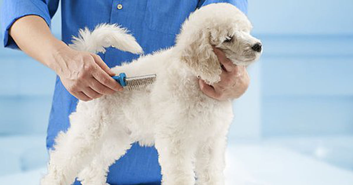 Dog Losing Hair The Possible Causes And What To Do Next Care Com