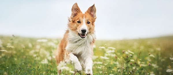 Can You Give Your Dog Pain Relievers